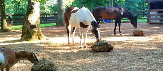 horses and goat grazing from Hay Pillows