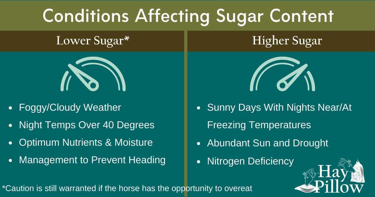 Conditions affecting sugar content of pasture and hay