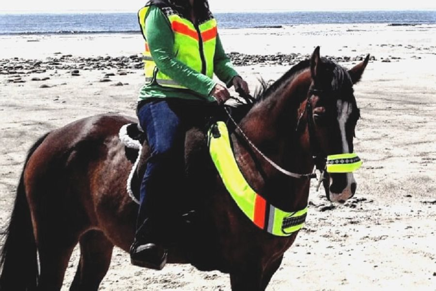High visibility safety vest, breast plate & noseband for equestrians