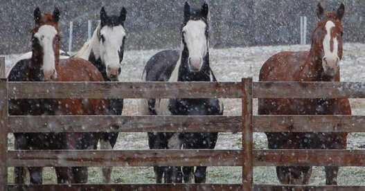 Four horses in the snow standing at the fence.
