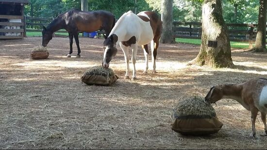 Two horses and a goat eating from Hay Pillows in multiple locations