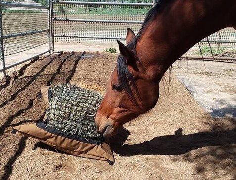 Horse eating from a Hay Pillow slow ground feeder bag