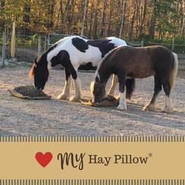 Two draft horses eating from hay pillow slow feeders.