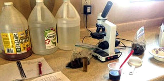 Equine fecal testing for parasites