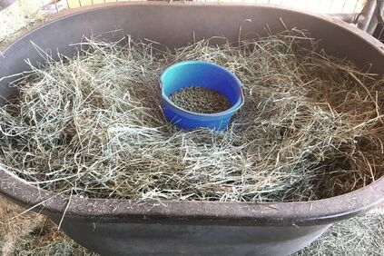 5 lbs of grass hay vs. 5 lbs of pellets by volume.