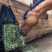 Horse eating from Hanging Hay Pillow slow feed bag in barn
