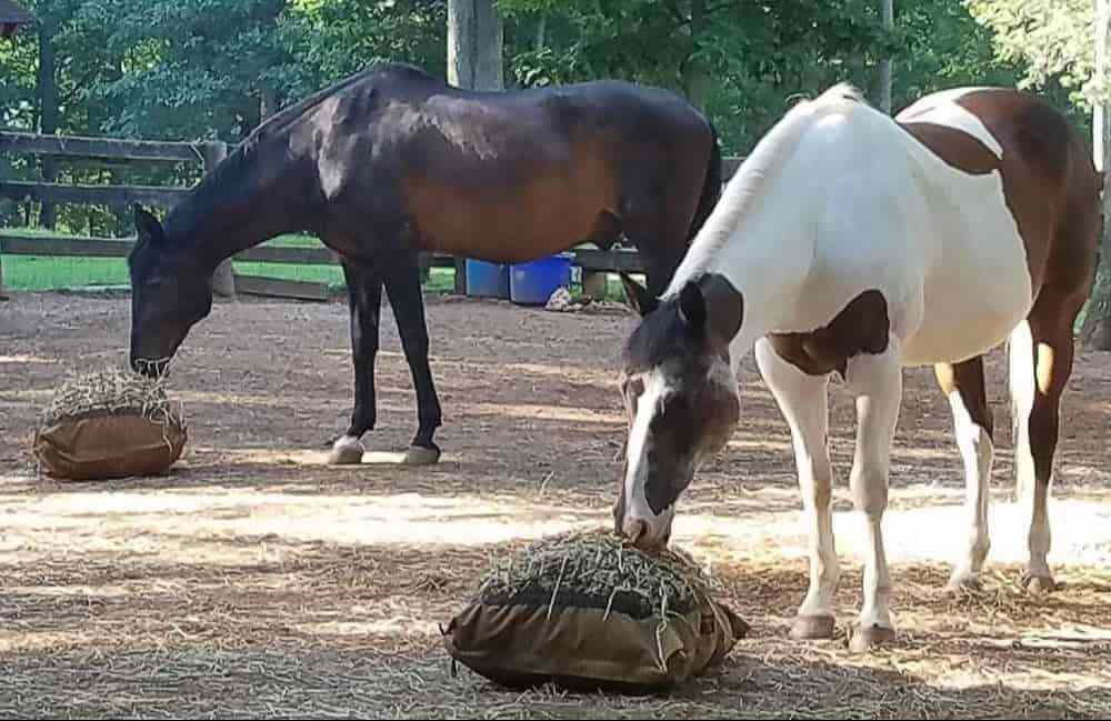 Two horses eating from Hay Pillow Slow Ground Feeders.