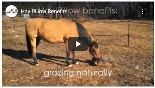 Hay Pillow Slow Feeders - See How it Works Video