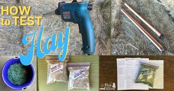 How to test your hay and where to send the samples