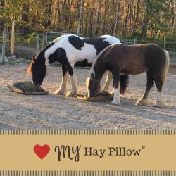 Two large draft horses eating from hay pillow slow feeders on the ground.