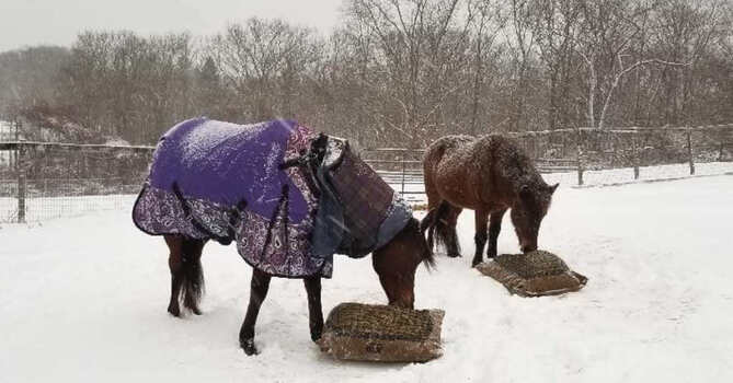 Two horses eating outside in snow flurries from Hay Pillows